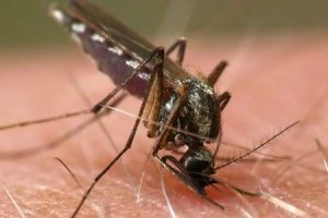 fight against mosquitos effectively