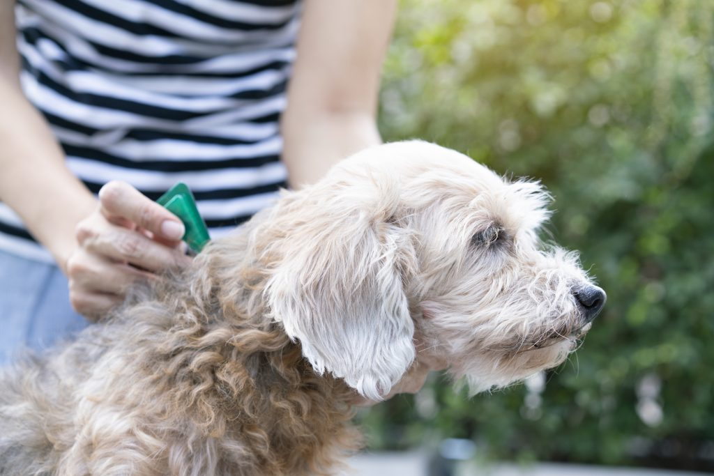 Mobile dog grooming coconut grove