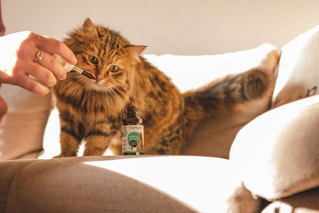 Points to be considered while purchasing CBD oil for cats