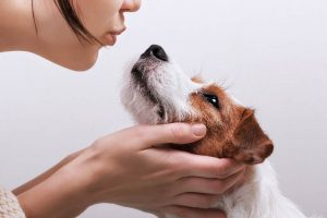 Discover The Qualities Of A Good Pet Sitter